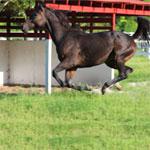 activities-horse-breaking