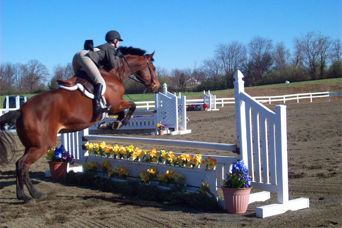 why you should try horse jumping